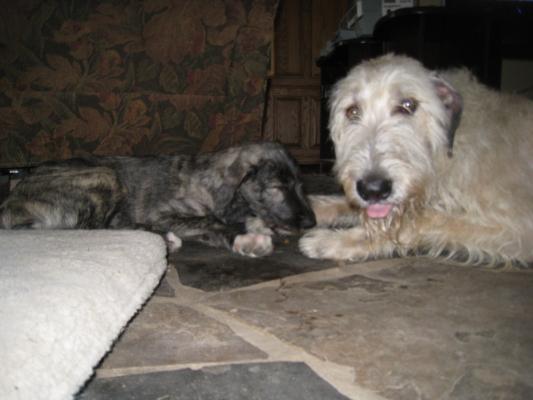 Dog Training Erin Ontario